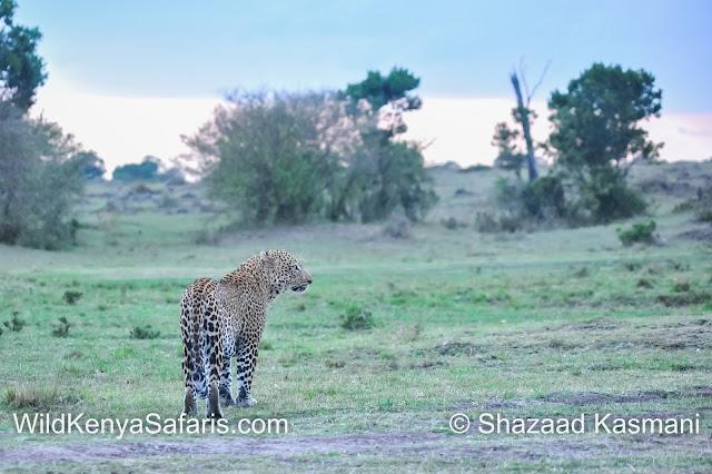 Wildlife Kenya, Wildlife Diaries, Shazaad Kasmani, Diani Beach Safaris, Mombasa Safaris, Diani Tours, Mombasa Tours