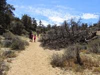 Heading south on Panorama Loop Trail, Black Rock Canyon, Joshua Tree National Park
