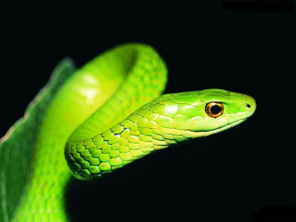 snake - photo #38