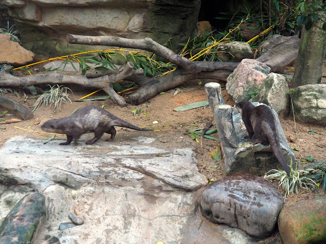 Otter exhibit in Ocean Park, Hong Kong