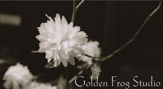 Golden Frog Studio