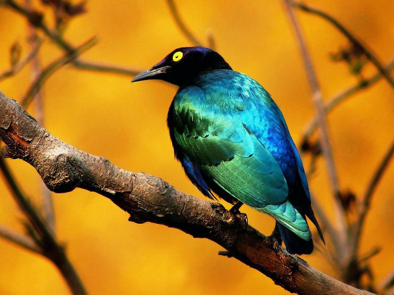 Amazing Wild Life Photography  Birds Desktop Wallpapers Wallpaper Zone