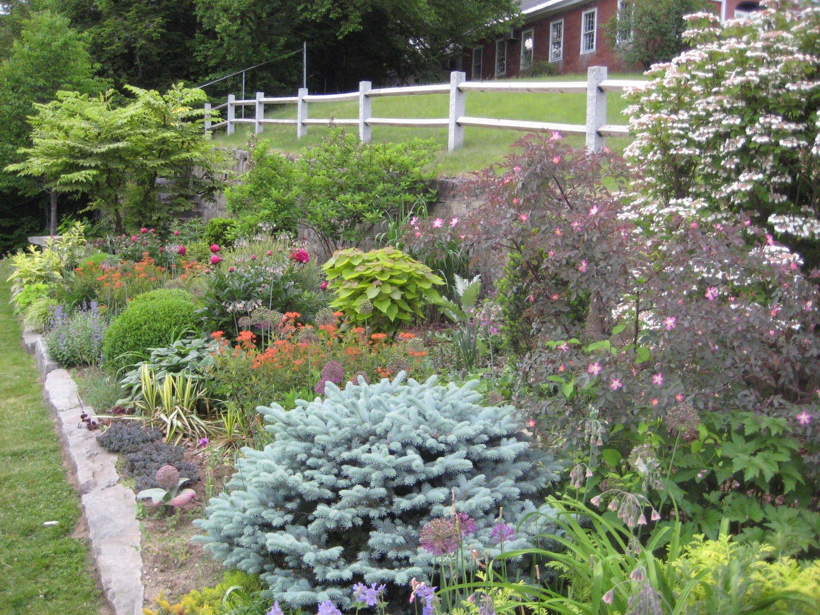 The gardener 39 s eye editing a mixed border it is all for Shrubs for garden borders
