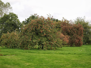 Fruit orchard at Sissinghurst Castle Gardens, Kent