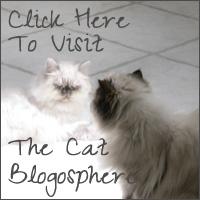 The Cat Blogosphere