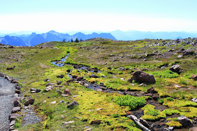 Meadow Along Skyline Trail