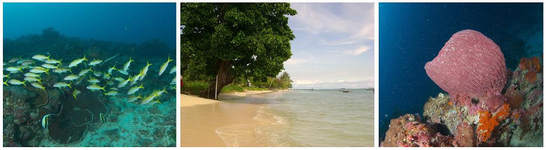 Wisata Ke Pantai Mabapura Di Kota Maba,
