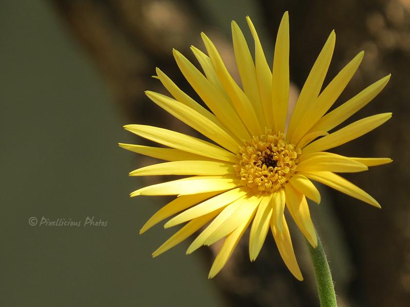 Floral Photography: Canon SX50 HS