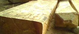 kayu bayur