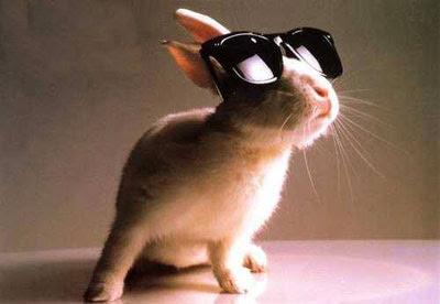 conejo+con+lentes Imagenes de conejos..