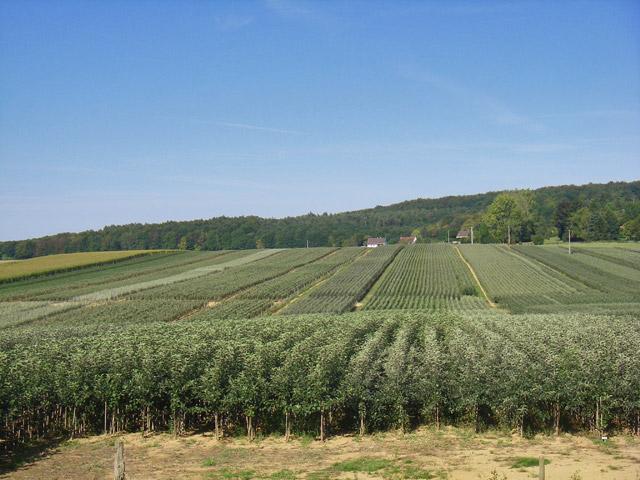aşılı elma fidan parselleri
