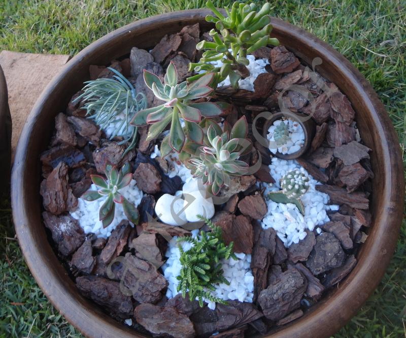 mini jardins em vaso:artedecor: Mini vasos e mini jardins