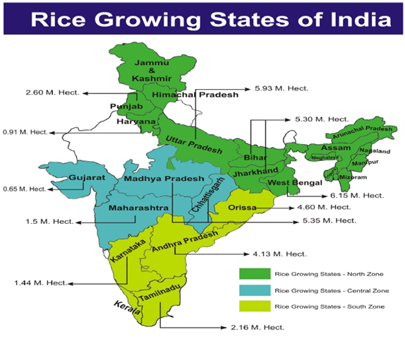 mustard cultivation in india pdf