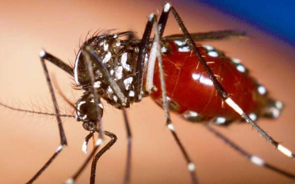 Kumpulan Darah Yang Disukai Nyamuk