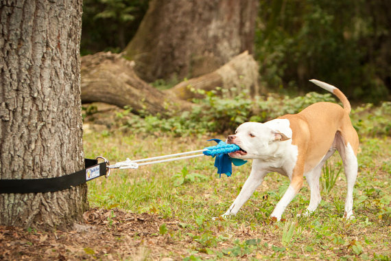 Dog Tug Of War Ball Toy