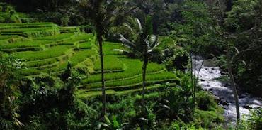 #32 Bali Wallpaper