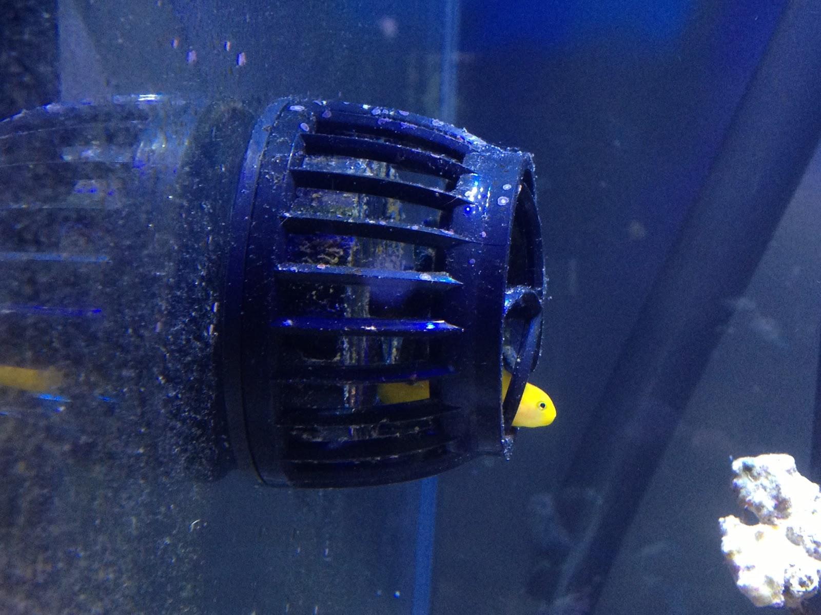 emboli 39 s aquariums marine tank fish and powerheads