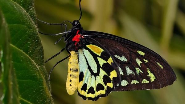 The Best Top desktop Butterflies Wallpaper HD Widescreen
