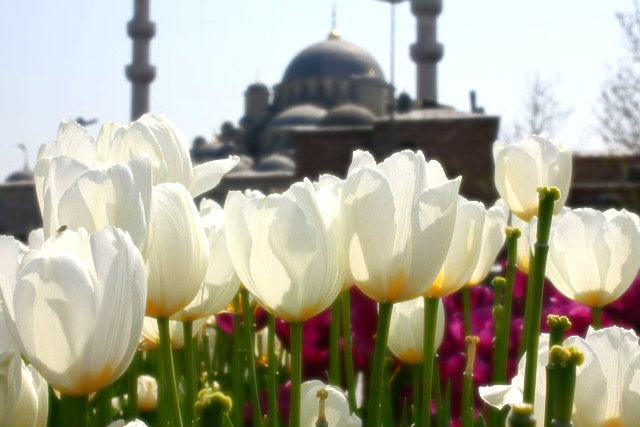 cami çiçek sultanahmet