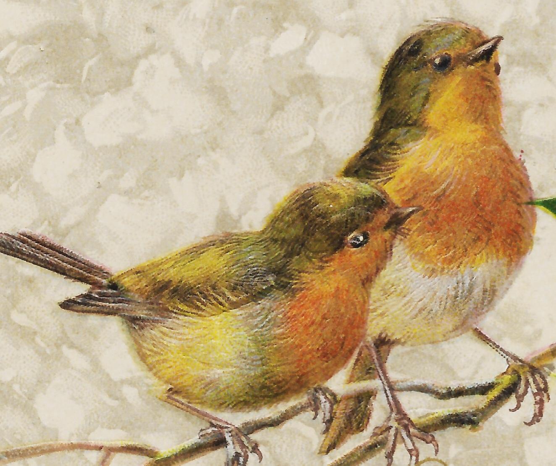 Vintage Birds - 1911