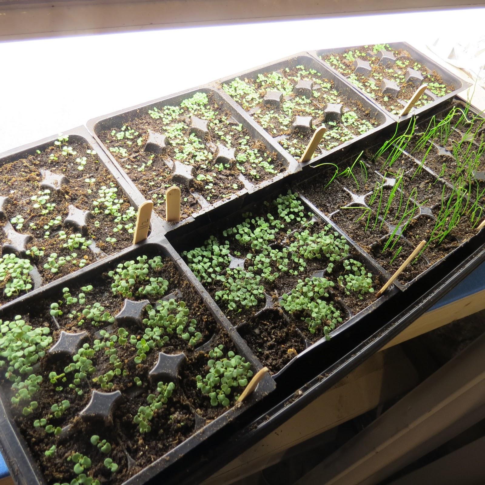 The rusted vegetable garden for Indoor vegetable garden