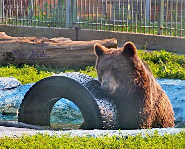 urs zoo ramnicu valcea