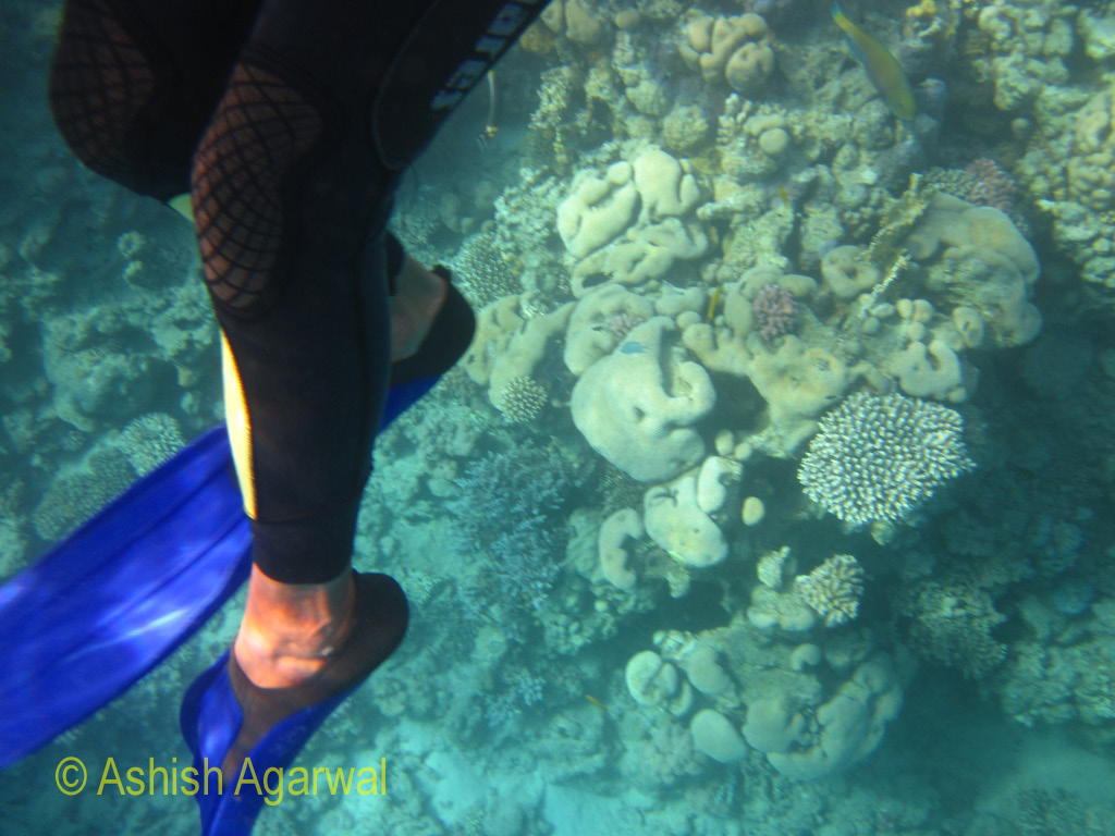 Guide, in a body suit, right next to some coral reefs, in the Ras Muhammad marine park in Egypt
