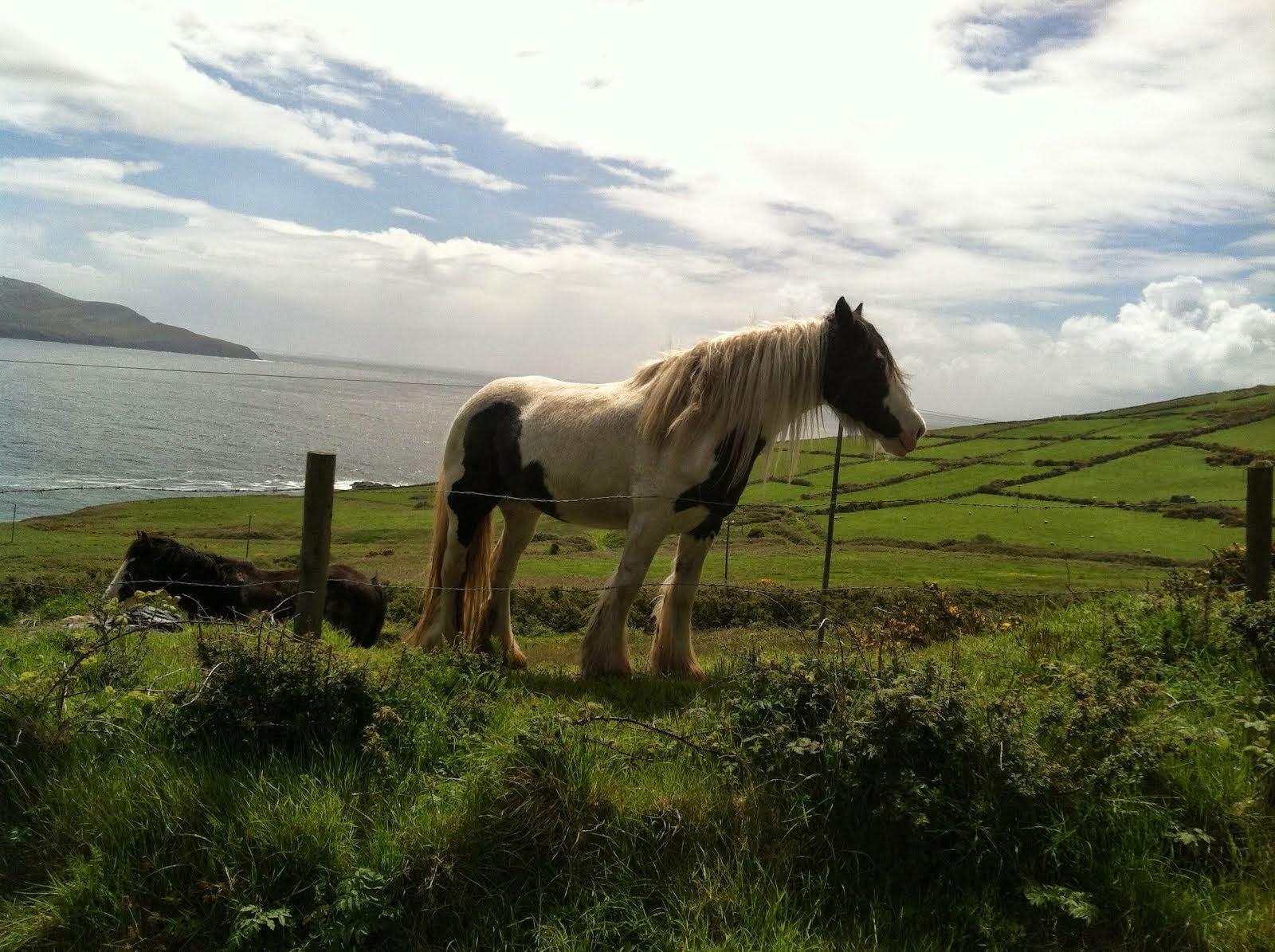 Roadside Horse in Ireland