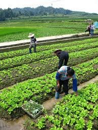 Subsidy to Farmers for Using Organic Fertilizers