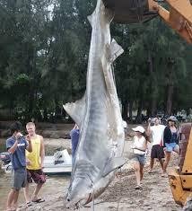 bethany hamilton shark