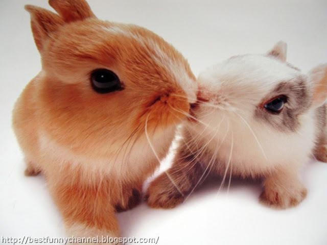 Cute bunny kiss.