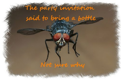 Blue bottle fly party