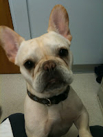 - Brachycephalic Syndrome In Dogs and Cats Christine Ross