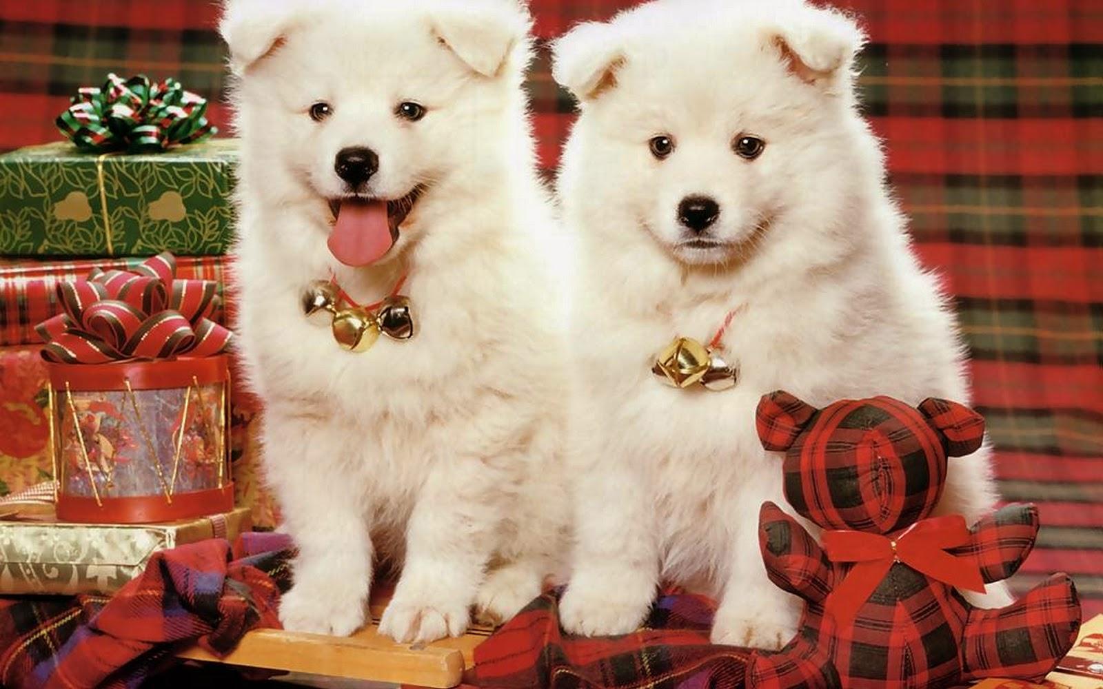 Cute Dogs In Christmas Wallpaper Desktop   wallarthdcom