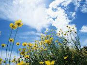 Il linguaggio segreto dei fiori (fiori)