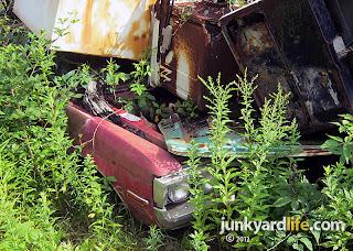 Loner S Salvage Car Crushing