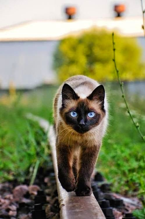 Top 10 Friendliest Cat Breeds