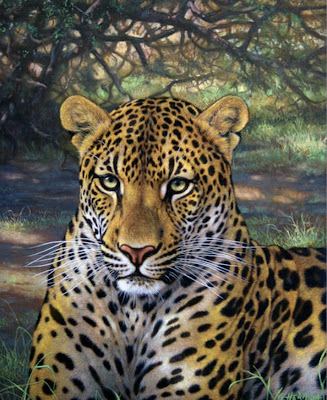 tigre pintura