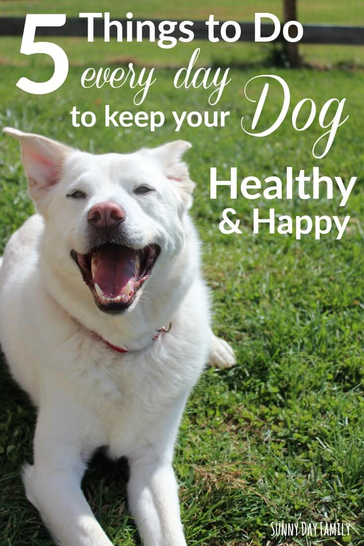Do these 5 little things every day to keep your dog healthy and happy! A daily dog care routine that really works.