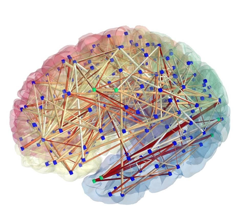 Circuito Neuronal : Los viciosos de la lengua identifican circuitos