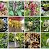 9 Tip Pemilihan Pokok Sebagai Sumber Nektar & Pollen Untuk Kelulut