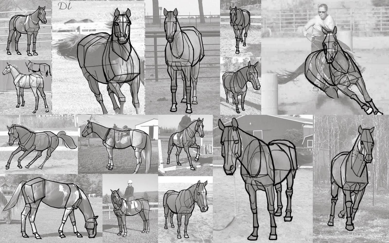 Animal Anatomy Homework | David Benson\'s Art Blog