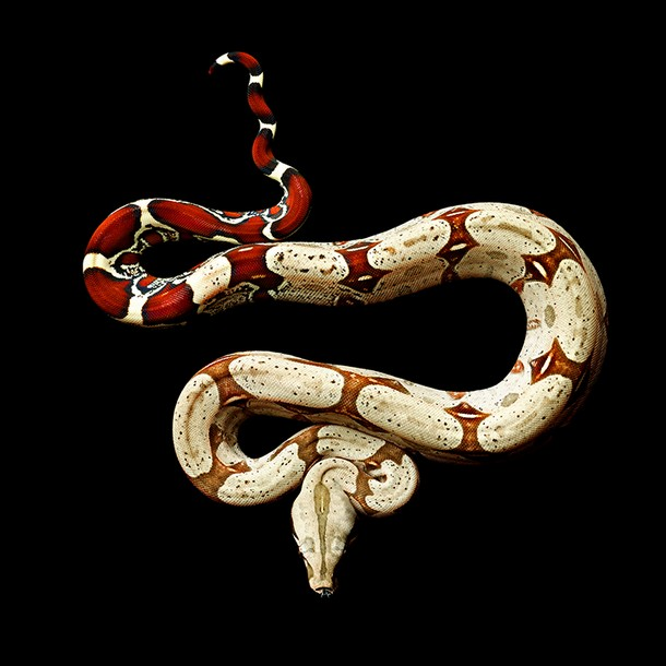Vivid Snake Photos