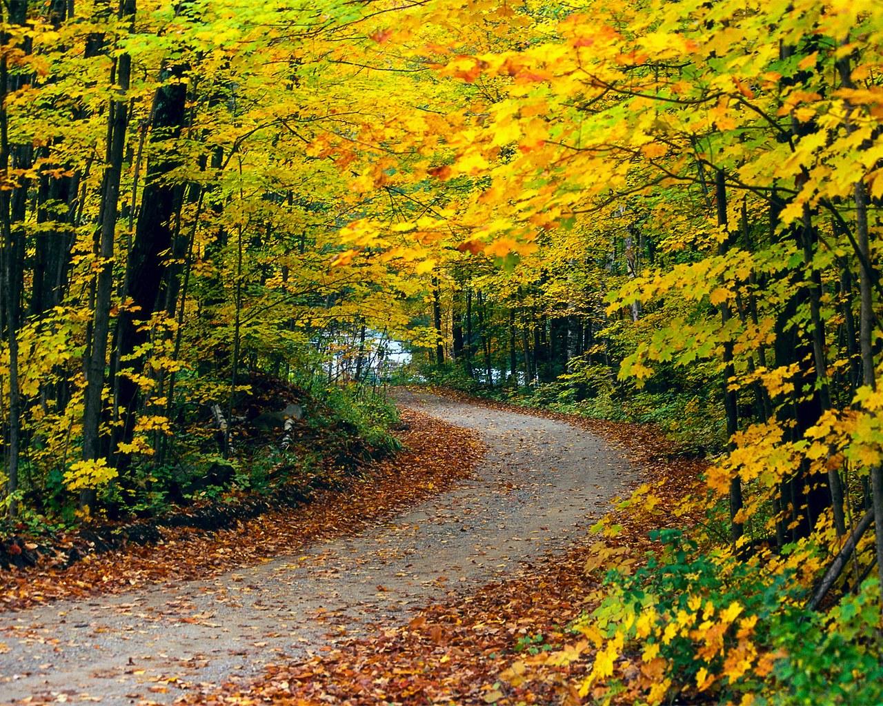 The best top autumn desktop wallpapers 13 En Güzel Sonbahar HD Duvar Kağıtları
