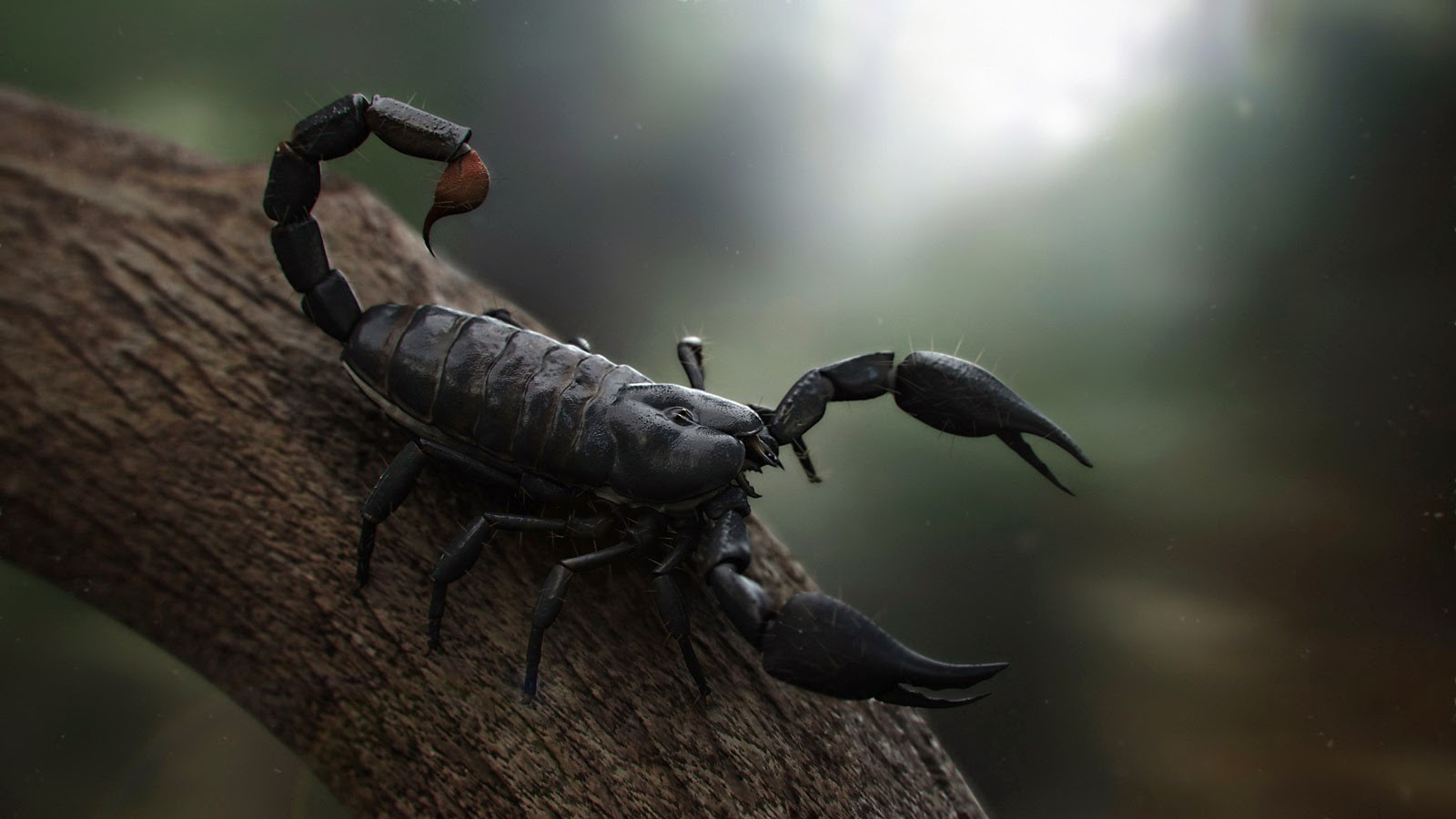 Scorpions Is There Anybody There Another Piece Of Meat