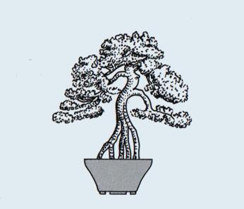http://evoluzionebonsai.blogspot.it/2015/02/stili-bonsai-neagari-radici-esposte.html