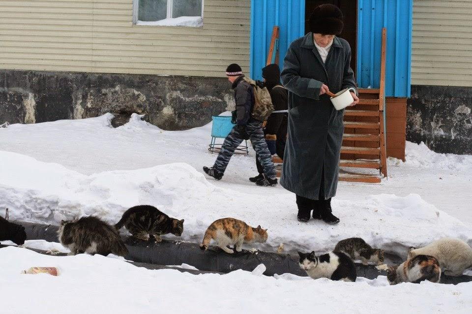 Коты случаются 03