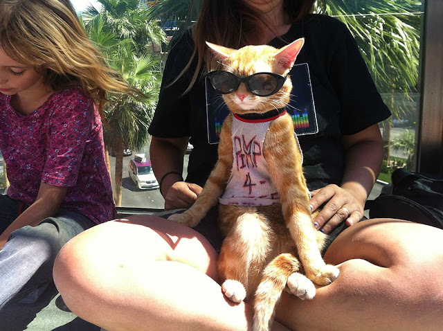 cat pictures, cat photos, awesome cat