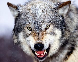 wolf%2B3.jpg