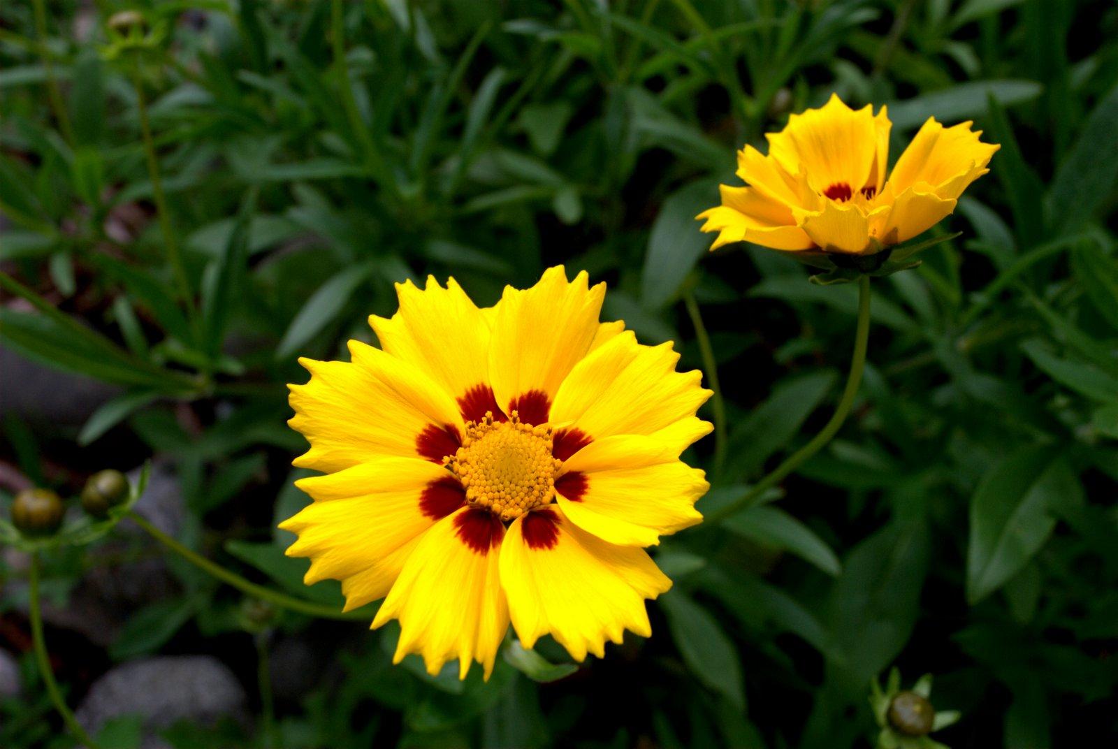 Ad40 fleurs au jardin avec le retour du beau temps for Fleurs au jardin